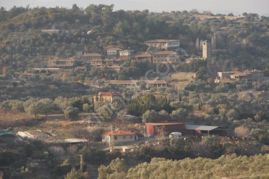 Selçuk Şirincede Satılık Köy Manzaralı 12 dönüm Bağ ve Bahçe - undefined
