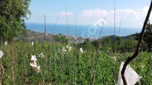 Trabzon EN11 EMLAK Akçaabatta Satılık Deniz Manzaralı Arsa