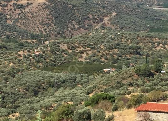 Selçuk'ta Satılık Merkeze Yakın Şeftali Bahçesi ve Çiftlik - Manzara
