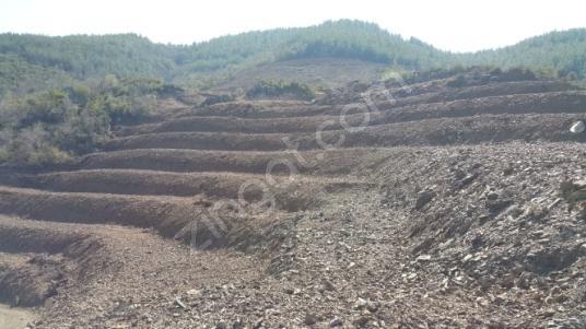 Gazipaşa Hasdere'de Satılık Tarla 16 dönüm tarla - Arsa