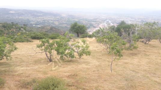 Tire'de Satılık  Muhteşem Manzaralı İncir ve Zeytin Bahçesi..