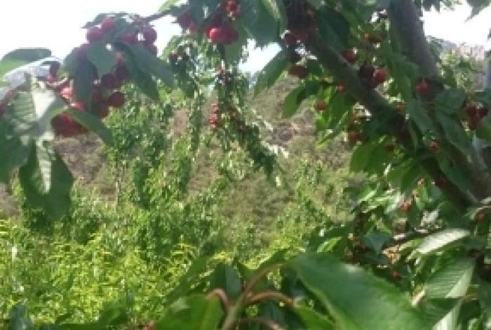 Erdemli Çerçili'de Satılık Bahçe