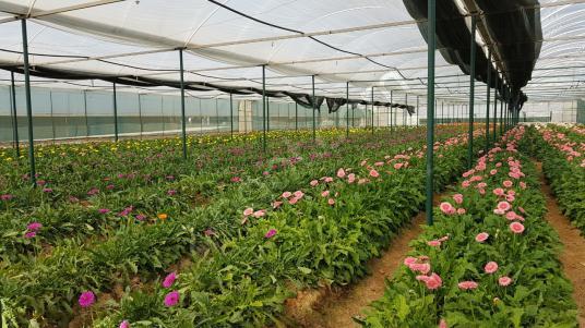 Satılık,İçinde Evi Olan Donanımlı Çiftlik - Bahçe