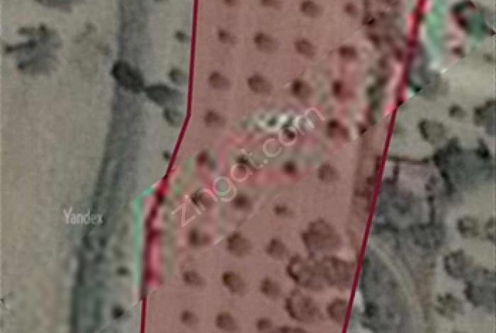 Narya Gyo'dan Esentepe Belkent Karşısında Satılık Zeytinlik