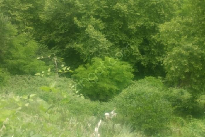 Ortahisar Akyazı'da Satılık