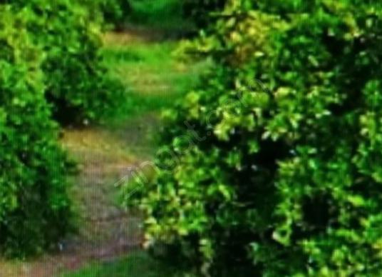 Konyaltı Zümrüt Mahallesinde İmara Sınır İki Adet 16 Dönüm Bahçe