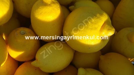 tarsus özlücede satılık limon bahçesi