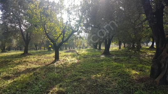 Yalova Altınova Kaytazdere'de 4399 m2 Satılık Arsa - Bahçe
