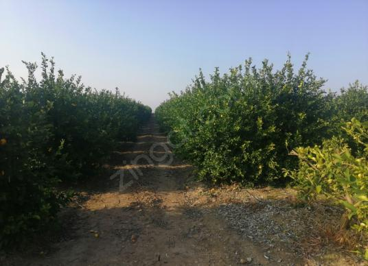 Yumurtalıkta Satılık Bahçe - Arsa