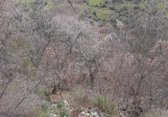 Bergama Yeniler köyünde 2971 m2 satılık tarla - Arsa