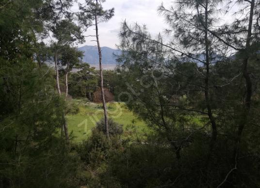 ÇANDIR'DA 3,5 DÖNÜM TARLA - Manzara