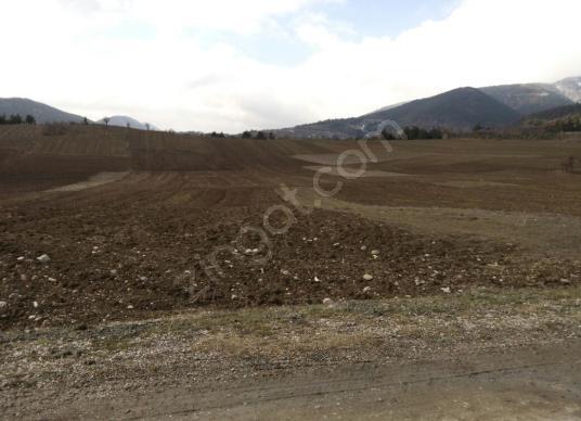 Bilecik osmaneli oğulpaşa köyünde 3 762 m2 arazi - Arsa