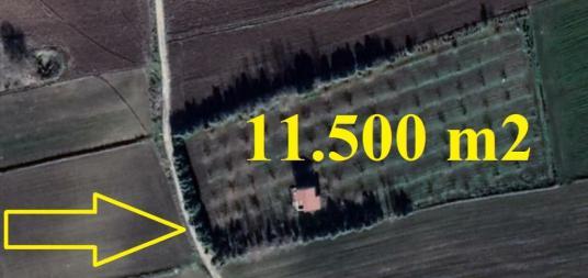 11.500 m2 HAZIR KURULU ÇİFTLİK DUBLEKS EV 110 CEVİZ AĞACI - undefined