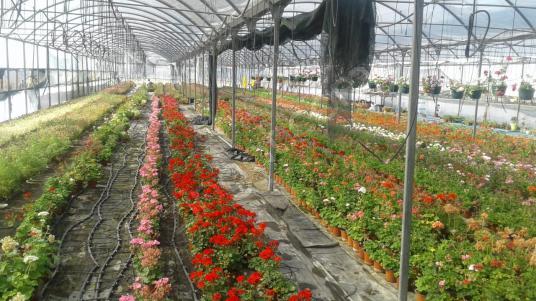Urla Kalabak'ta Devren Kiralık Faal Çiçek Serası