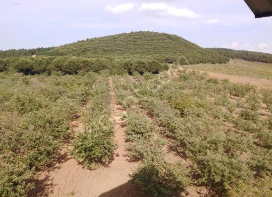 Mudanya Tirilye'de Satılık Çiftlik ve Arazi 78 Dönüm