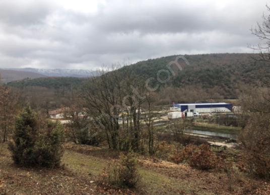 Bozüyük Saraycık Köyü'de Satılık Çiftlik Arazisi 23. 000 m2