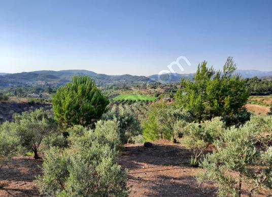 Seferihisar kavakderede satılık tarla ve narenciye bahçesi - Arsa