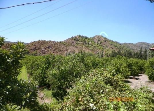 Muğla Dalaman Taşlıburun da 5 330 m2 yerli limon bahçesi satılık - Arsa