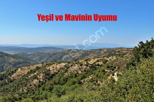 Payamlı'da Deniz Manzaralı Asfalta Sıfır Köy İçi İmarlı Arsa - Arsa