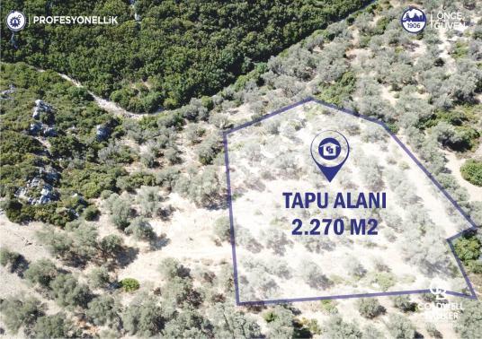 İzmir Karaburun Eğlenhoca'da Yerleşim Alanına Yakın Arazi - Arsa