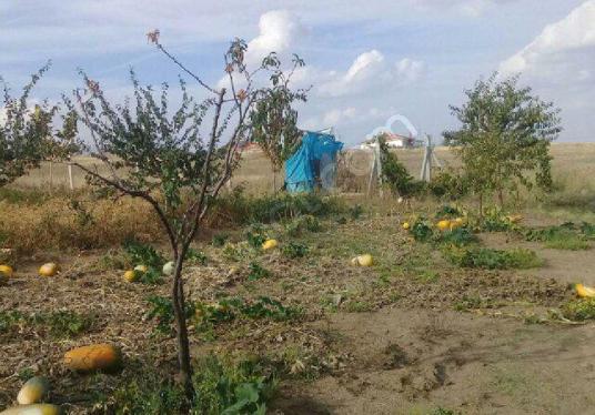 Kırşehir Kaman'da Satılık Konut İmarlı Arsa