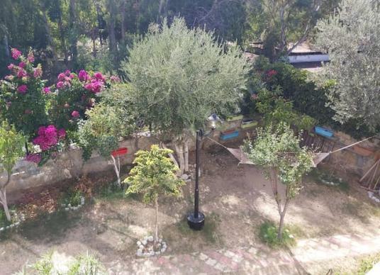 Bodrum'da Sahile Yürüme Mesafesinde Konforlu Ev - Bahçe