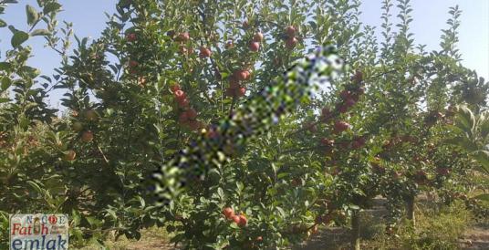 ULUKIŞLA'da 32  dönüm bakımlı satlık bahçe