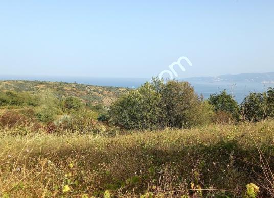 kirazlı mah köye yakın denize manzaralı 1200m2 yola cepheli tarl