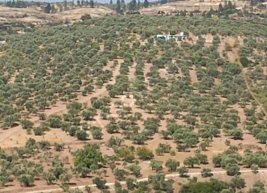 Torbalı Yazıbaşı'da Satılık Bahçe