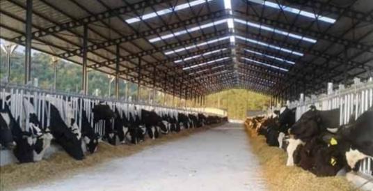 Yüreğir 'de Satılık büyükbaş çiftliği