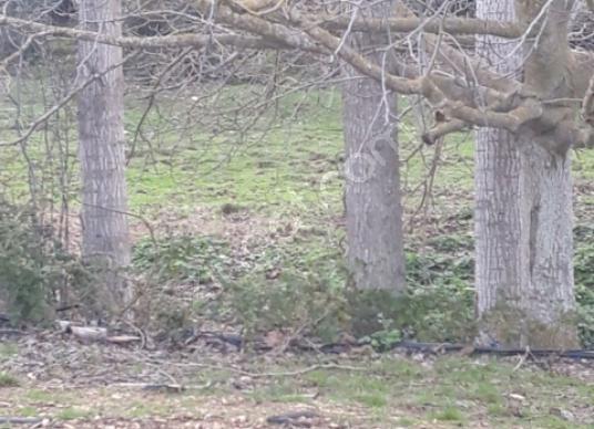 YUKSEL EMLAKTA Torbalı Ormanköy'de Satılık Bahçe - Arsa