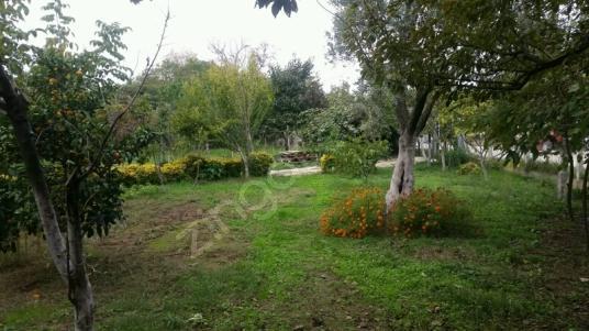 Teşvikiye Bahçeli müstakil ev - Bahçe