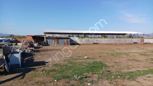 manisa horozköy de 4.500 m2 ruhsatlı büyük baş çiftlik
