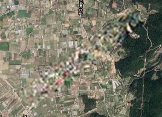 Urla Kuşçular'da satılık tarla - Harita