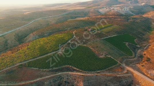 Alaşehir Muhteşem Konumlu ve Donanımlı Satılık Çiftlik & Bağ