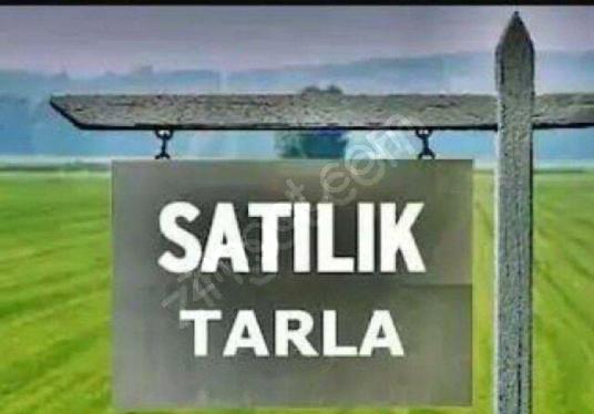Bursa Mustafa Kemal Paşa Satılık Kelepir 4.741m2 Tarla