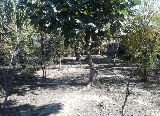 Köşk Çiftlikköy'de Satılık Bahçe ve Ev - Bahçe