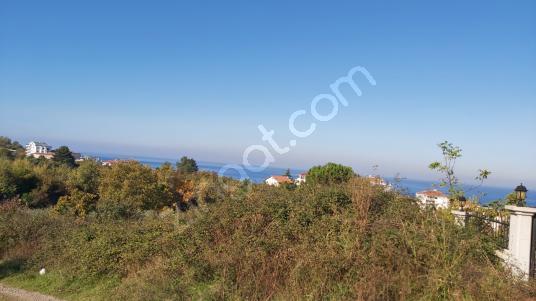 Çınarcık Deniz Manzaralı 1.118m2 Villa Arsası 2,5 Kat İmarlı - Manzara