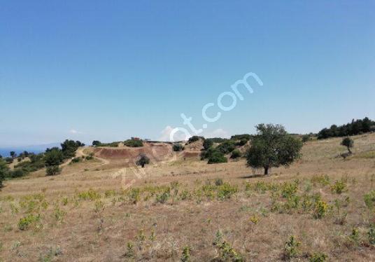 Foça Kozbeylide Satılık 6800 m2 Tarla - Arsa