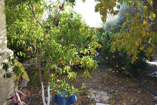 ANTALYA AKSU TOPALLI'DA İÇİNDE EVİ OLAN SATILIK MEYVE BAHÇESİ - Bahçe
