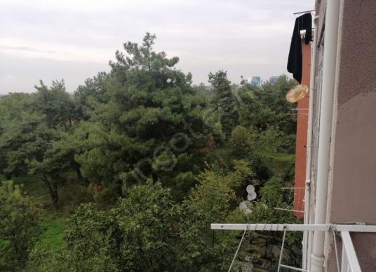 Satılık çiftlik tekirdağ seymen de etrafı orman mera süt ineği