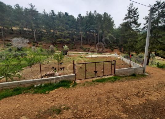 Köyceğiz Ağla Yayla da Fırsat 1050 m2 imarlı arsa satılık