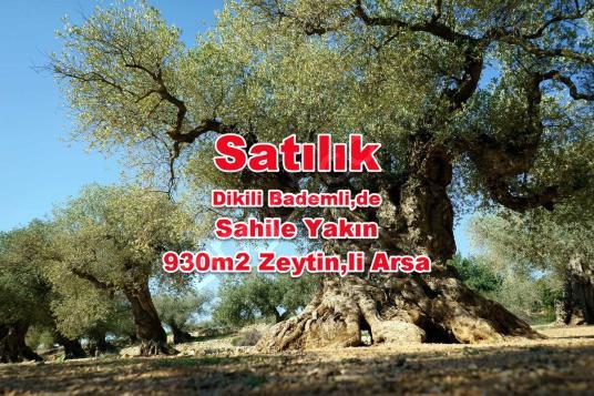 #DİKİLİ BADEMLİ SAHİL,DE  SATILIK 930m2  ZEYTİNLİ  TARLA - Arsa