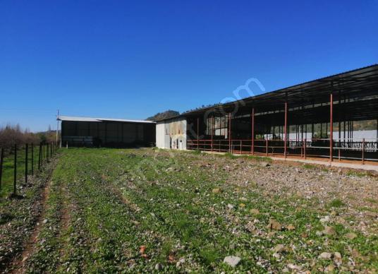 Ortaca da satılık 11300 m2 arazi sera besi ve mandıra tesisi - Arsa