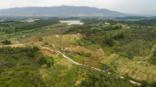 İzmir Kemalpaşa Yukarı Kızılca'da 38 Dönüm Ceviz Bahçesi - Arsa