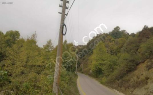 gölcük lütfiye köyü de ana asfalta sıfır - Arsa