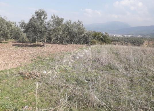 Osmaniye Merkez Akyar Köyü'de Satılık Bahçe