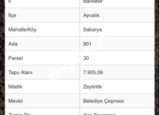 Ayvalık Sakarya'da Satılık Zeytinlik - Kat Planı