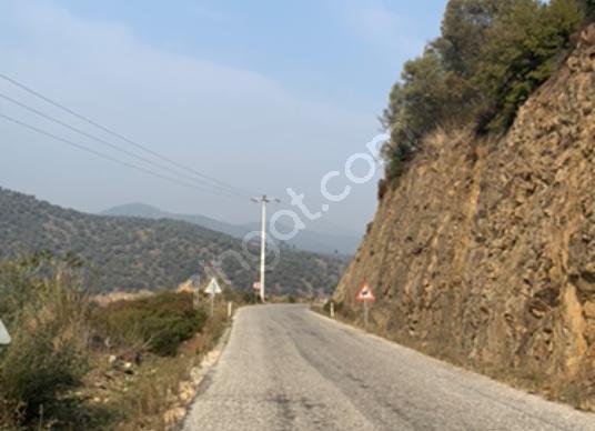 Bayındır Karapınar da Satılık Baraj Manzaralı  Zeytinlik 1909 m2 - Sokak Cadde Görünümü
