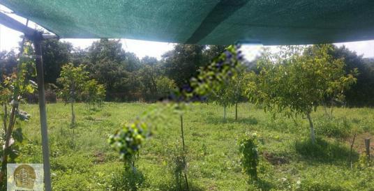 """Çanakkale'ye yakın""""5 dönüm""""çiftlik&meyve bahçesi""""138bintl."""